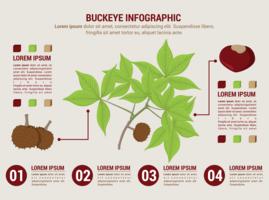 infográfico de buckeye