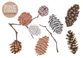 Hand Drawn Vector Isolated Cedar Cones
