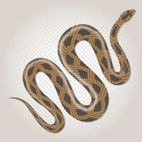 Brown Python Tropical Snake On Transparent Background Illustration