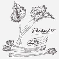 Rhubarb Set Illustration Vector