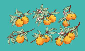 Peach Tree Vector