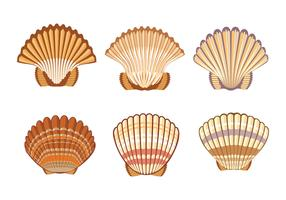Set of Scallops shell Illustration Isolated on White Background