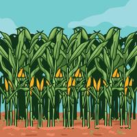 Corn Stalks on Farm illustration