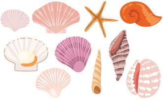 Free Seashells Vectors