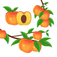 Tree Branch With Peaches vector