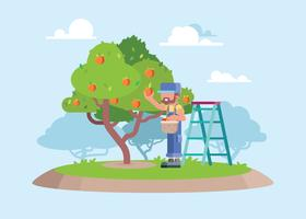 A Worker Picking Fresh Peach From Tree Illustration