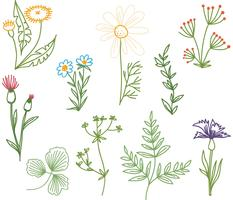 Vectores de hierbas Doodle gratis