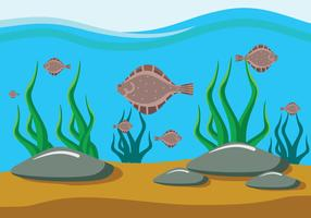 Flat Flounder Fish Illustration
