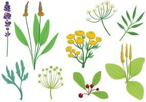 Free Medicinal Herbs 2 Vectors