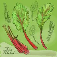 Illustration de rhubarbe fraîche