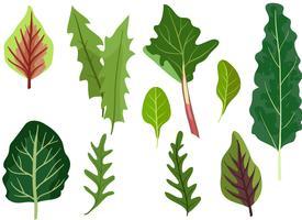 Vetores de folhas verdes