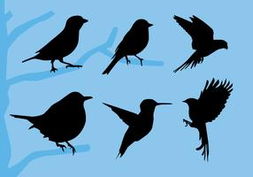 Bird Siluetas Vector Illustration