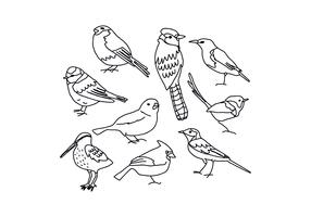Birds Drawings