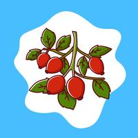 Rose hip vector illustration