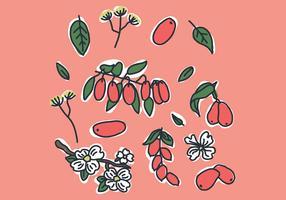 Röda Dogwood Blommor