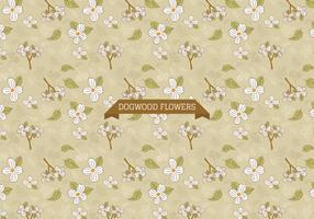 Dogwood Flowers Background