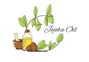 Jojoba Herbal Vector