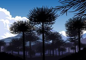 Silhouette Of Araucaria