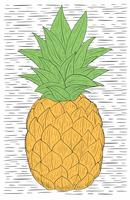 Vector Hand Drawn Pineapple Illustration