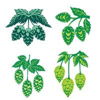 Green Hop Plant, Sketch Style Vector Illustration isolerad på vit bakgrund. Ripe Green Hop Cones, Ölbröd Ingrediens