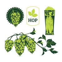 Green Hop Plant, Sketch Style Vector Illustration Isolated on White Background. Ripe Green Hop Cones, Beer Brewing Ingredient