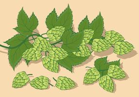 Hop Plant Vector Illustration