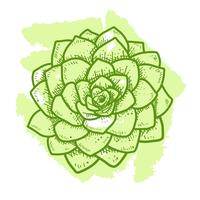 Succulents top view hand drawn style