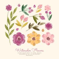Vector Watercolor Flowers and Rings