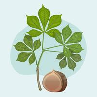 Buckeye With Leaf Vector Illustration