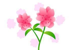 Beautifully Azalea Flowers Vectors
