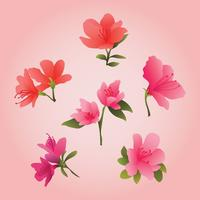 Beautiful Azalea Flowers Clipart