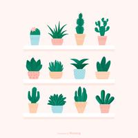 Succulents In Pot Stand On Shelves Vector