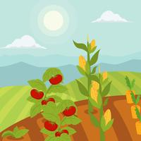 Vegetable garden vector Illustration