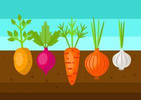 Vector de jardín de vegetales frescos
