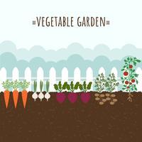 Vector de jardín de vegetales