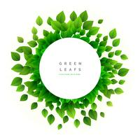 feuilles vertes eco nature fond