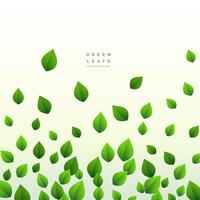 eco green leaves floating on white background