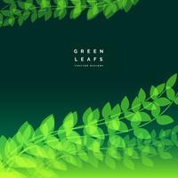 naturbakgrund med ljusa gröna blad