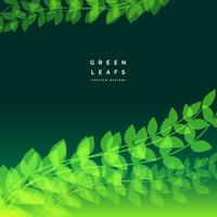 Fondo de naturaleza con hojas verdes brillantes