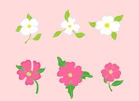 Hartriegel-Blumen