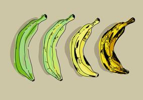 Plantain Color Transformation Hand Drawn Vector Illustration
