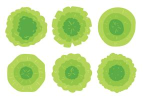 Green Plant Top View Vector