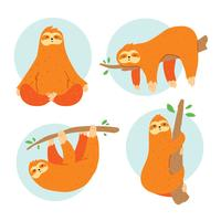 Sloth On White Vector