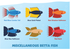 Miscellaneous Betta Fish vector