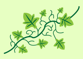 ivy vine vector