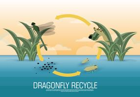 Dragonfly Lifecycle Vector Illustration
