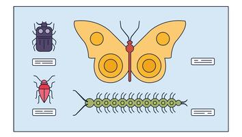 Study Insects Vector