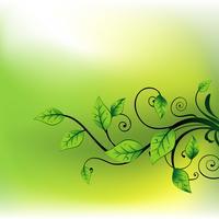 vector beautiful leaf
