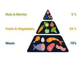 Vetores exclusivos da dieta cetogênica