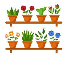 House Plant Vector
